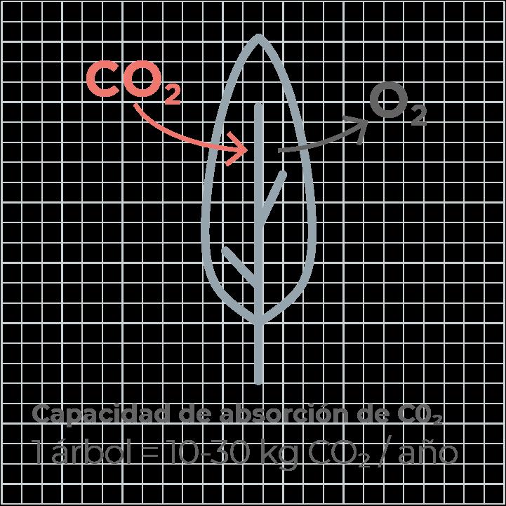 Capacidad absorción co2 arbol